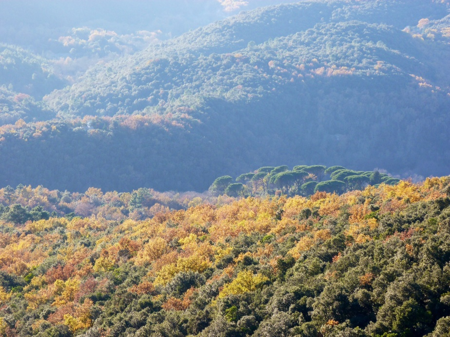 Autumn colours in the Cevennes