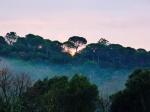 New Year's Dawn 2014