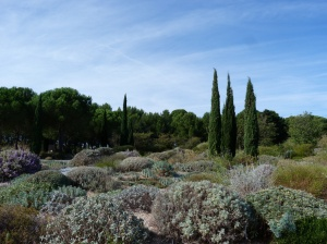 Display garden after its pre-winter prune at Olivier Filippi's nursery, Meze