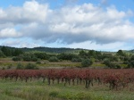 Vineyard in late autumn, Minervois