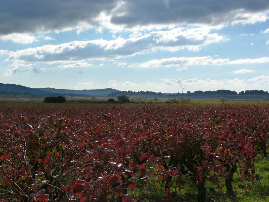 Cesseras, Languedoc (November 2013)