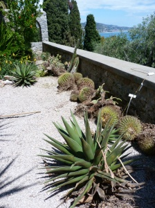 A very spiky job on a very hot day! Renovating an old cactus bed on the Palazzo Terrace