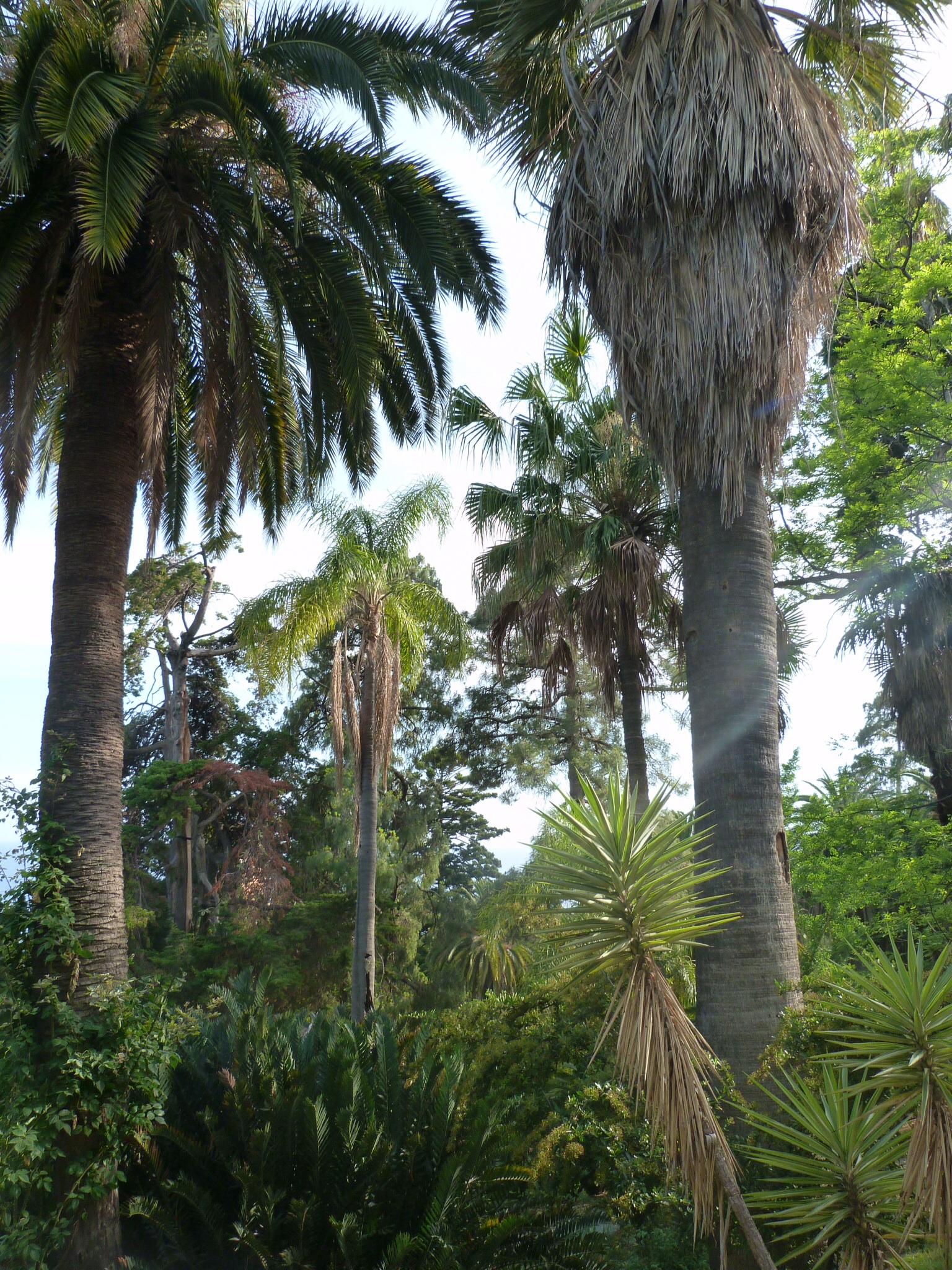 La mortola living and working at the hanbury botanical gardens le jardin champ tre for Jardin hanbury