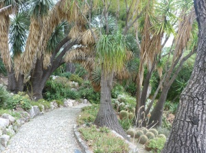 Cactus and Palm section