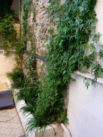 Project - Terrace Vegetale.